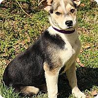 Adopt A Pet :: Innis - Staunton, VA