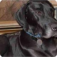 Adopt A Pet :: JD/Tank - Inver Grove Heights, MN