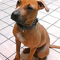 Adopt A Pet :: Merry - North Chittenden, VT