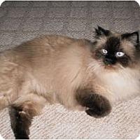 Adopt A Pet :: Smokey - Naples, FL