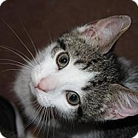 Adopt A Pet :: Goose (LE) - Little Falls, NJ