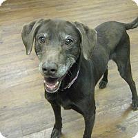 Adopt A Pet :: Kristi - Lake Odessa, MI