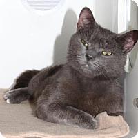 Adopt A Pet :: Oakley - Venice, FL