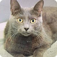 Adopt A Pet :: Andromeda - Mount Laurel, NJ