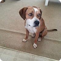 Adopt A Pet :: Rufus - Laingsburg, MI