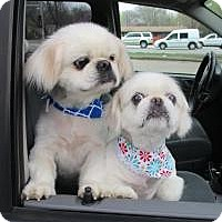 Adopt A Pet :: Ling Ling and Frosty - Shawnee Mission, KS