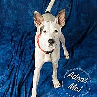 Adopt A Pet :: Roscoe - Gillsville, GA