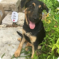 Adopt A Pet :: Bohdi - Pipe Creed, TX