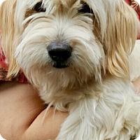 Adopt A Pet :: I'M ADOPTED Copa Jeffrey - Oswego, IL
