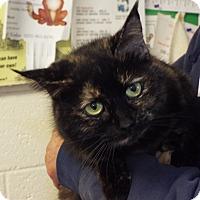 Adopt A Pet :: June Bug - Shelby, MI