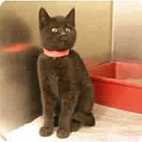 Adopt A Pet :: Magic - Arlington, VA
