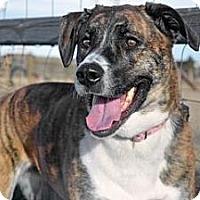 Adopt A Pet :: Chelsea - Cheyenne, WY