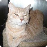 Adopt A Pet :: Sandy - Colmar, PA