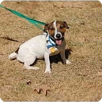 Adopt A Pet :: Spinner - West Chester, OH