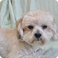 Adopt A Pet :: Pooch - Tumwater, WA