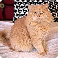 Adopt A Pet :: Aslan - San Antonio, TX