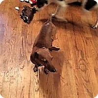 Adopt A Pet :: Odie - New Kensington, PA