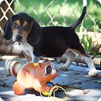 Adopt A Pet :: Reebok - Fayetteville, GA