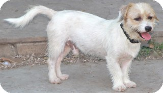 Terrier (Unknown Type, Small) Mix Dog for adoption in Norwalk, Connecticut - Elkins