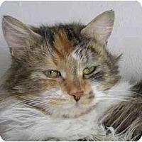 Adopt A Pet :: Fern (*video*) - Portland, OR