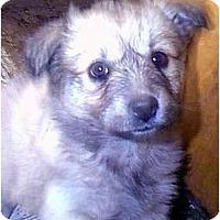 Adopt A Pet :: DEMI - dewey, AZ