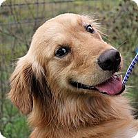 Adopt A Pet :: AIDAN - Carrollton, TX