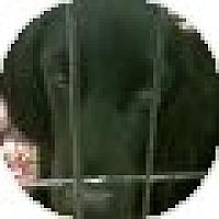 Adopt A Pet :: Briggs - Denver, CO