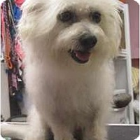Adopt A Pet :: Romeo2 - Kingwood, TX