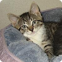 Adopt A Pet :: ANAKIN - 2014 - Hamilton, NJ