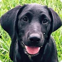 Adopt A Pet :: Prescott#2F - Orlando, FL