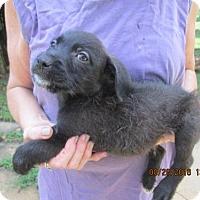 Adopt A Pet :: RIPLEY - Brookside, NJ
