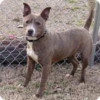 Adopt A Pet :: Dixie - Joliet, IL