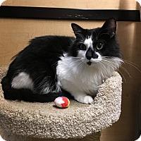 Adopt A Pet :: Jax - Riverside, CA