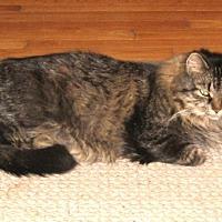 Adopt A Pet :: Ophelia - Galloway, NJ