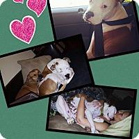 Adopt A Pet :: Mongo - Scottsdale, AZ