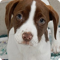 Adopt A Pet :: Jack - Long Beach, NY