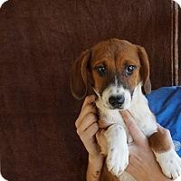 Adopt A Pet :: Candi - Oviedo, FL