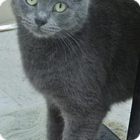 Adopt A Pet :: Grace - Chambersburg, PA