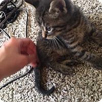 Adopt A Pet :: A425810 Anubis - San Antonio, TX