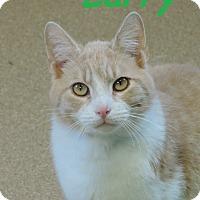 Adopt A Pet :: Larry - Brookings, SD