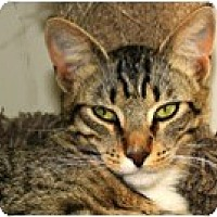 Adopt A Pet :: Bacio - El Cajon, CA