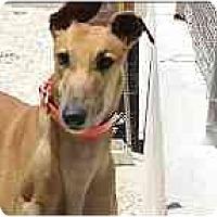 Adopt A Pet :: Albie - St Petersburg, FL