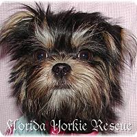 Adopt A Pet :: Lola - Palm City, FL