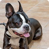 Adopt A Pet :: Rufus - Rigaud, QC