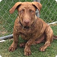 Adopt A Pet :: Sky - Mission Viejo, CA