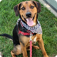 Adopt A Pet :: Monte *foster me - Richmond, VA