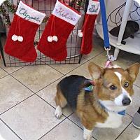 Adopt A Pet :: Aidan Lucas - Lomita, CA