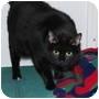 Adopt A Pet :: Digit - Lincoln, NE