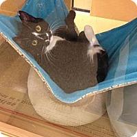 Adopt A Pet :: Pickamee - Monroe, GA