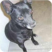 Adopt A Pet :: Kole - Phoenix, AZ